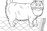 Cat Coloring Pages - Cats 17 Cats Coloring Pages for Teens and Adults