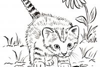 Cat Coloring Pages - Easily Grumpy Cat Coloring Pages Cats Ngbasic