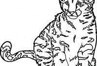 Cat Coloring Pages - Extraordinary Ideas Wild Cat Coloring Pages Ocelot Page Free