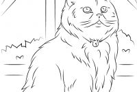 Cat Coloring Pages - Sitting Persian Cat Coloring Page