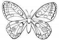 Coloring Pages for Girls - New butterfly Coloring Pages for Girls Easy