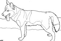 Dog Coloring Pages - Siberian Husky Dog Coloring Page