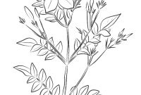 Flower Coloring Pages - Awesome Jasmine Flower Coloring Pages Design