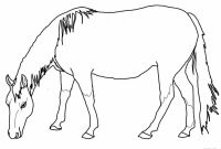 Horse Coloring Pages - 28 Collection Of Appaloosa Horse Coloring Pages