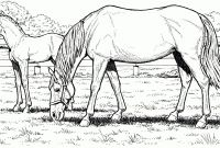 Horse Coloring Pages - Realistic Horse Coloring Pages Valid Limited Realistic Horse