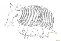 Advanced Animal Coloring Pages - Armadilo Coloring Page