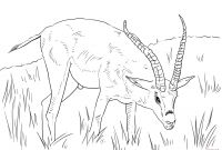 African Safari Coloring Pages - African Savanna Coloring Pages Free Safari Coloring Pages Best
