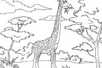 African Safari Coloring Pages - Safari Coloring Pages African Safari Coloring Pages Inspirational