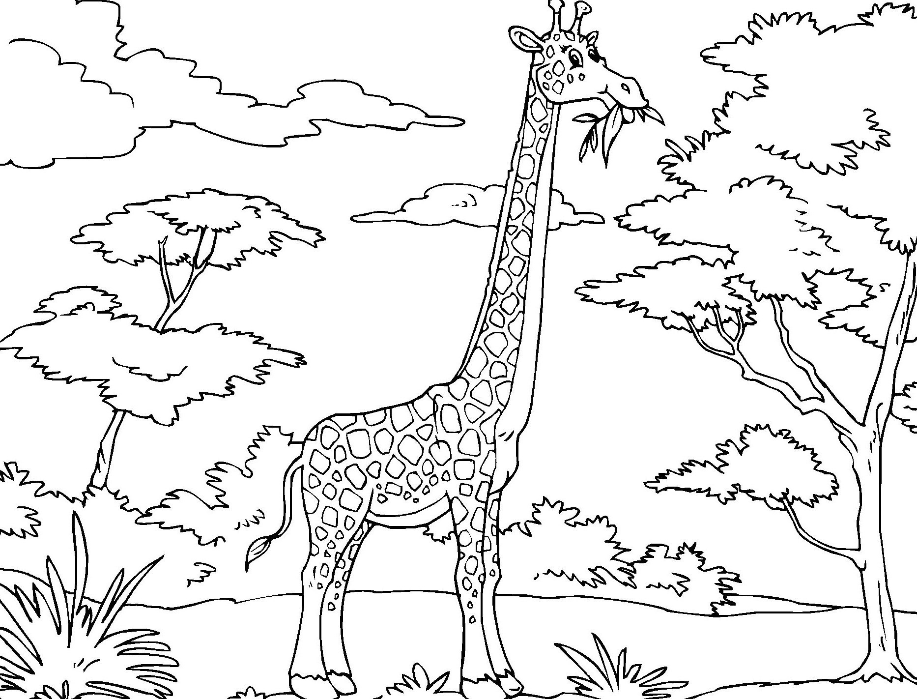 African Safari Coloring Pages Printable | Free Coloring Sheets