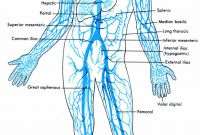 Circulatory System Coloring Pages - 1181 Best Rock Images On Pinterest