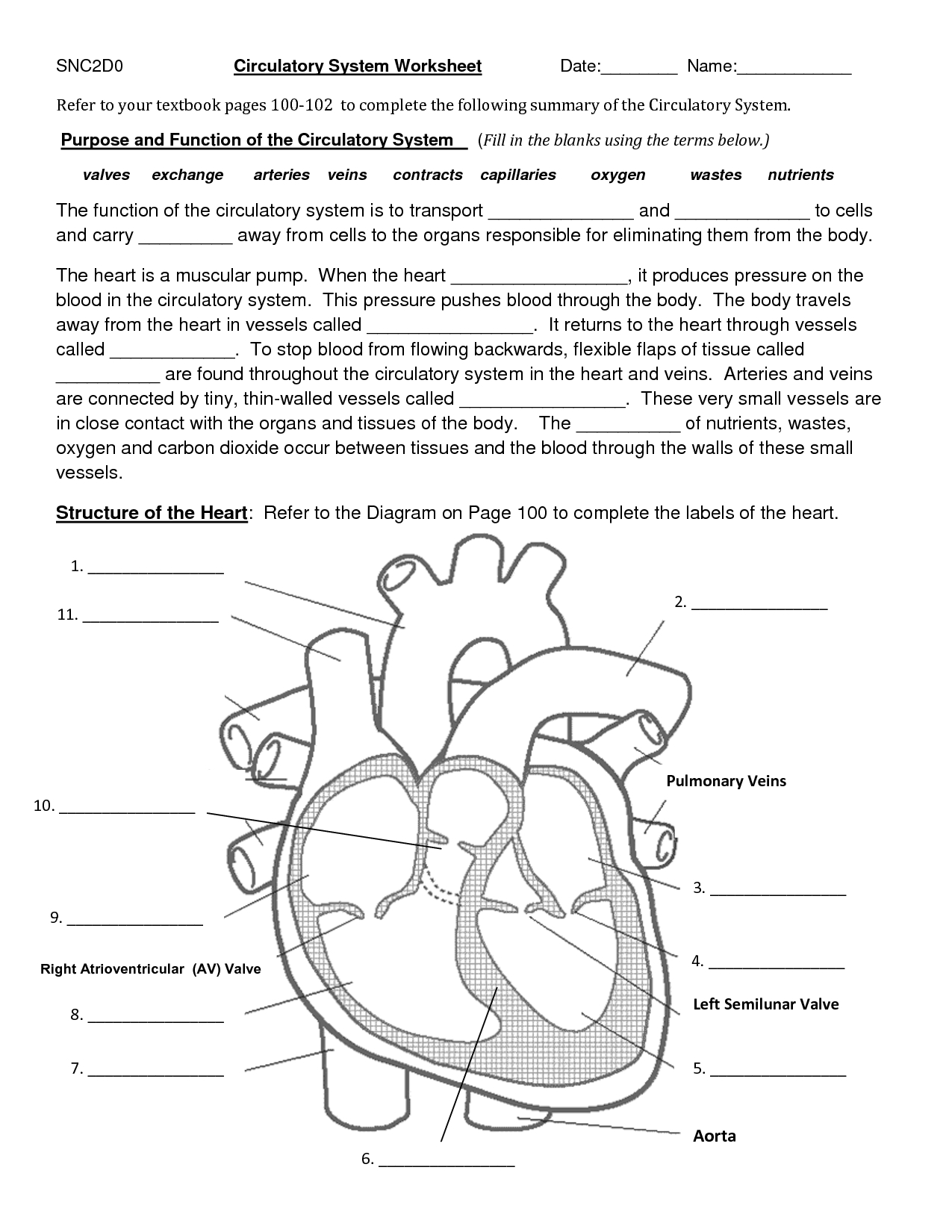 Circulatory System Coloring Pages - Circulatory System Diagram Worksheet