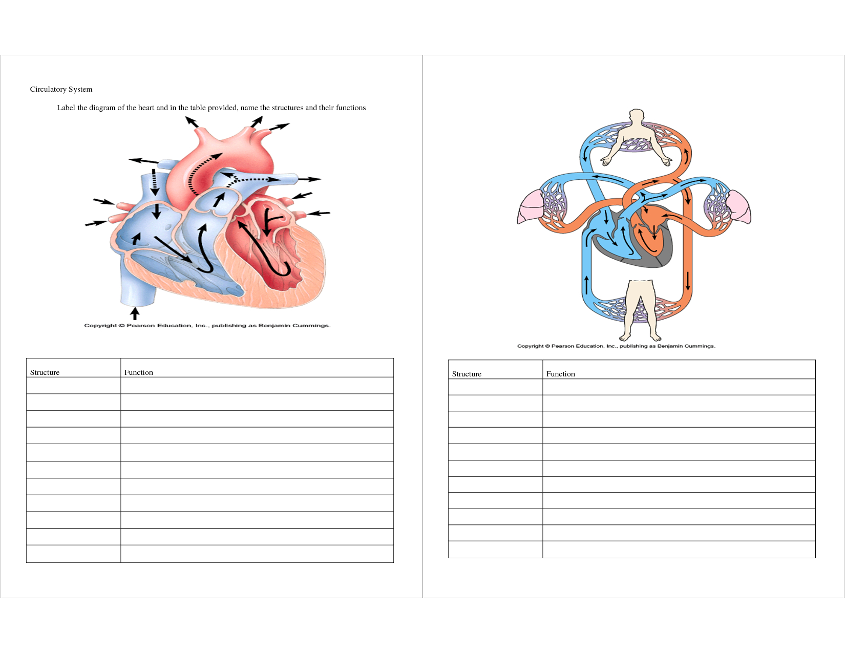 Circulatory System Coloring Pages  Collection 14p - Free Download