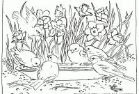 Coloring Pages Of Ducks - Coloring Page Duck Cool Coloring Page Unique Witch Coloring Pages