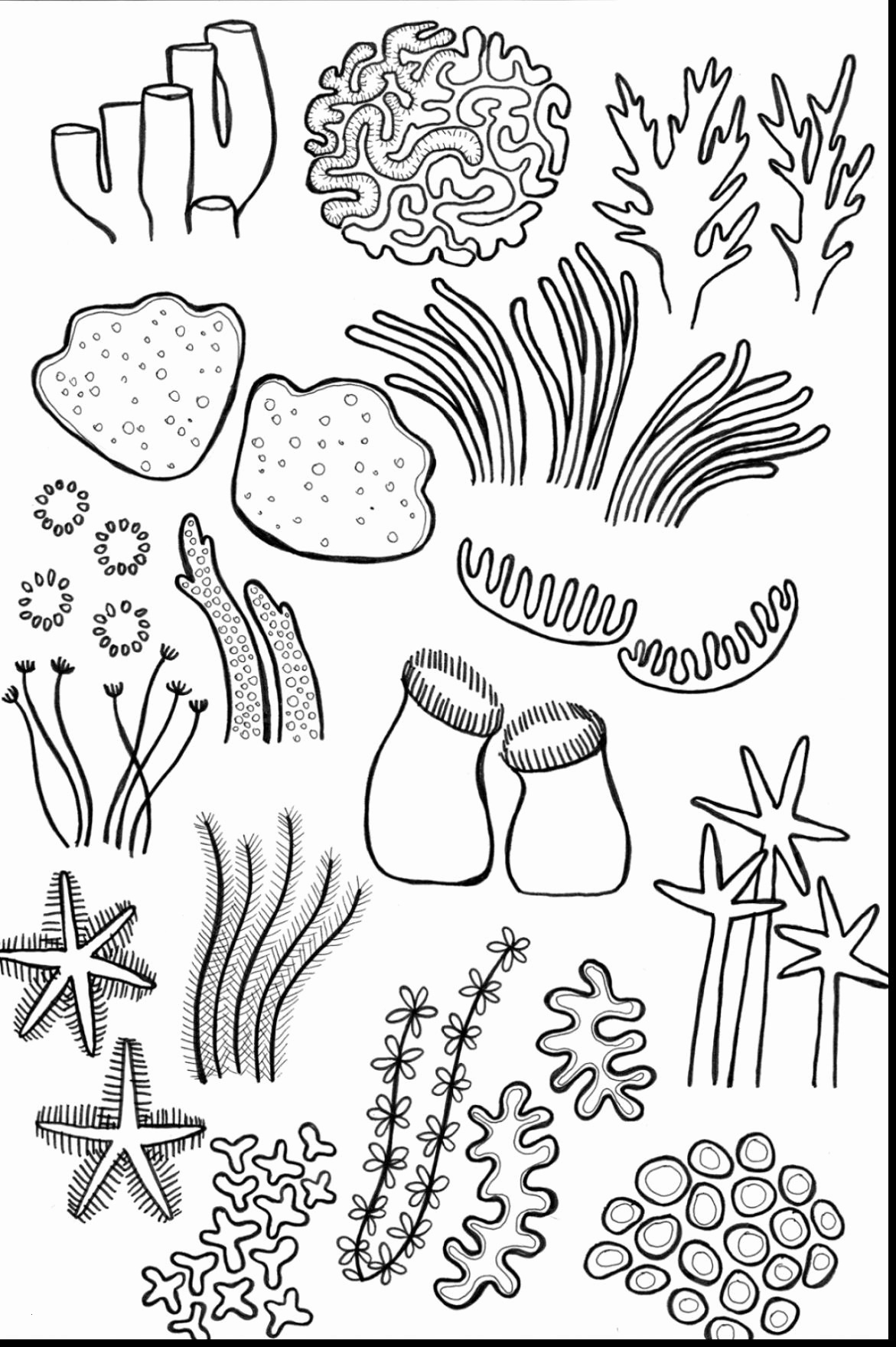 Coral Reef Coloring Pages  Collection 12q - Free Download