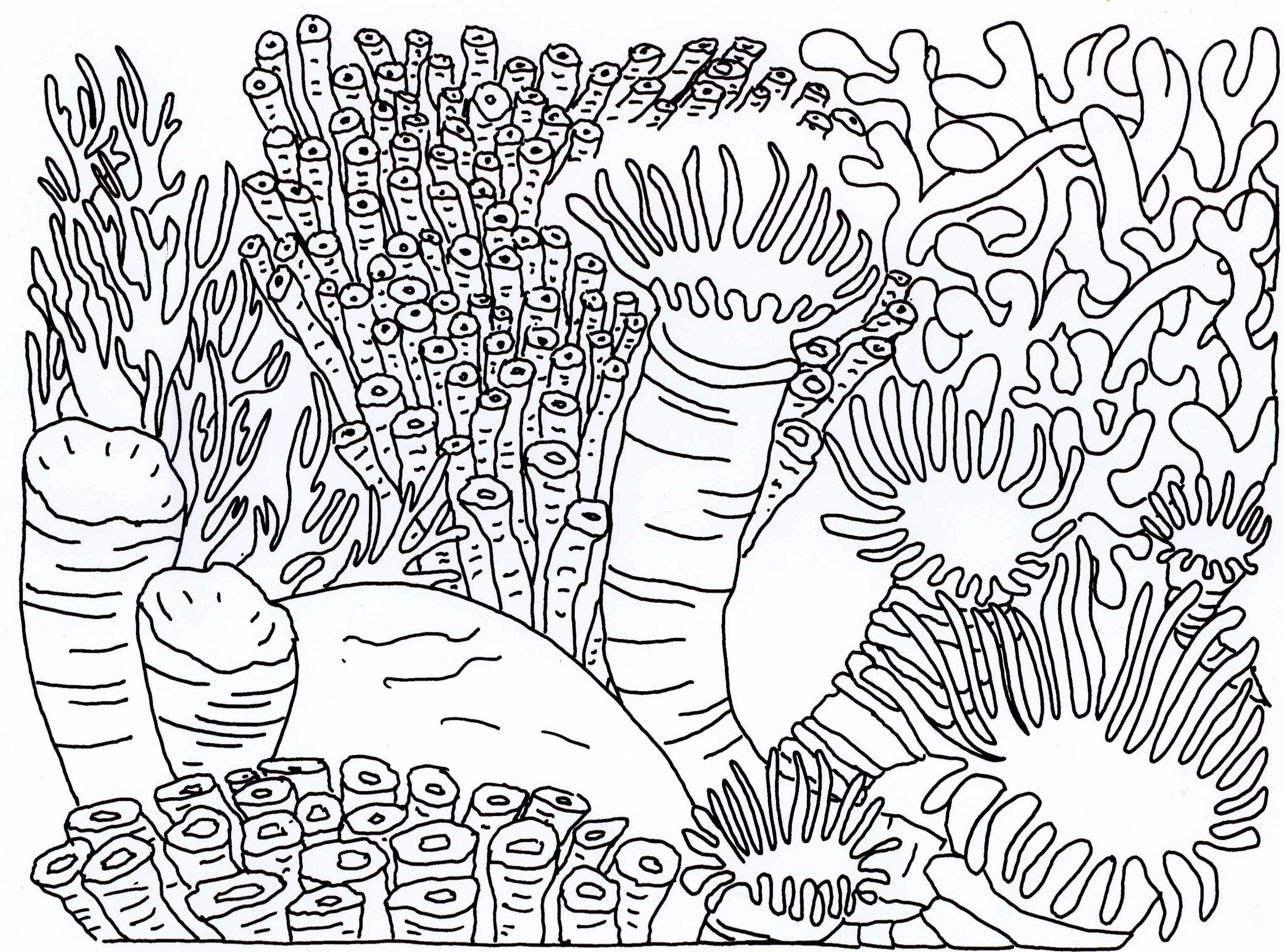 Coral Reef Coloring Pages  Collection 18o - Free For Children