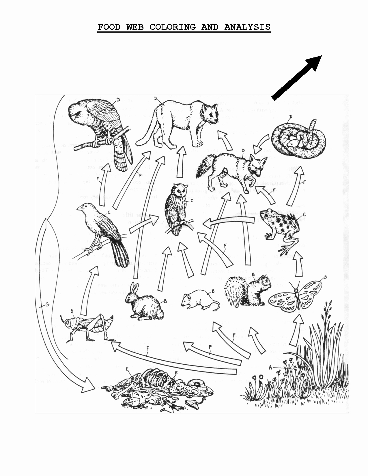 Food Chain Coloring Pages  Gallery 3c - Free For kids