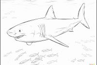 Great White Shark Coloring Pages - Animal Whale Shark Color Star Coloring Pages Geometric Coloring