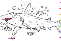 Great White Shark Coloring Pages - Free Printable Shark Coloring Pages New Fruits Coloring Pages