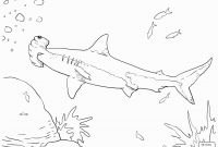 Great White Shark Coloring Pages - Hammerhead Shark Coloring Page