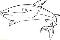 Great White Shark Coloring Pages - Mako Shark Clipart Jaws Free Pnglogocoloring Pages Mako Shark