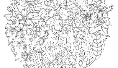 Johanna Basford Coloring Pages - Afbeeldingsresultaat Voor Johanna Basford Magical Jungle