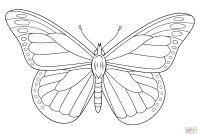Monarch butterfly Coloring Pages - butterfly Coloring Pages
