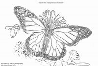 Monarch butterfly Coloring Pages Free - 22 Awesome A Coloring Page A butterfly