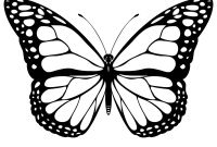 Monarch butterfly Coloring Pages Free - butterfly Color In