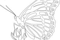Monarch butterfly Coloring Pages Free - butterfly Coloring Pages