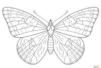 Monarch butterfly Coloring Pages Free - Fresh Google butterfly Coloring Pages
