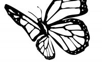 Monarch butterfly Coloring Pages Free - Wwwbutterfly Coloring Pages Wwwbutterfly Coloring Pages New