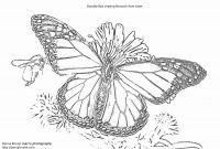 Monarch butterfly Coloring Pages - Wwwbutterfly Coloring Pages Wwwbutterfly Coloring Pages New