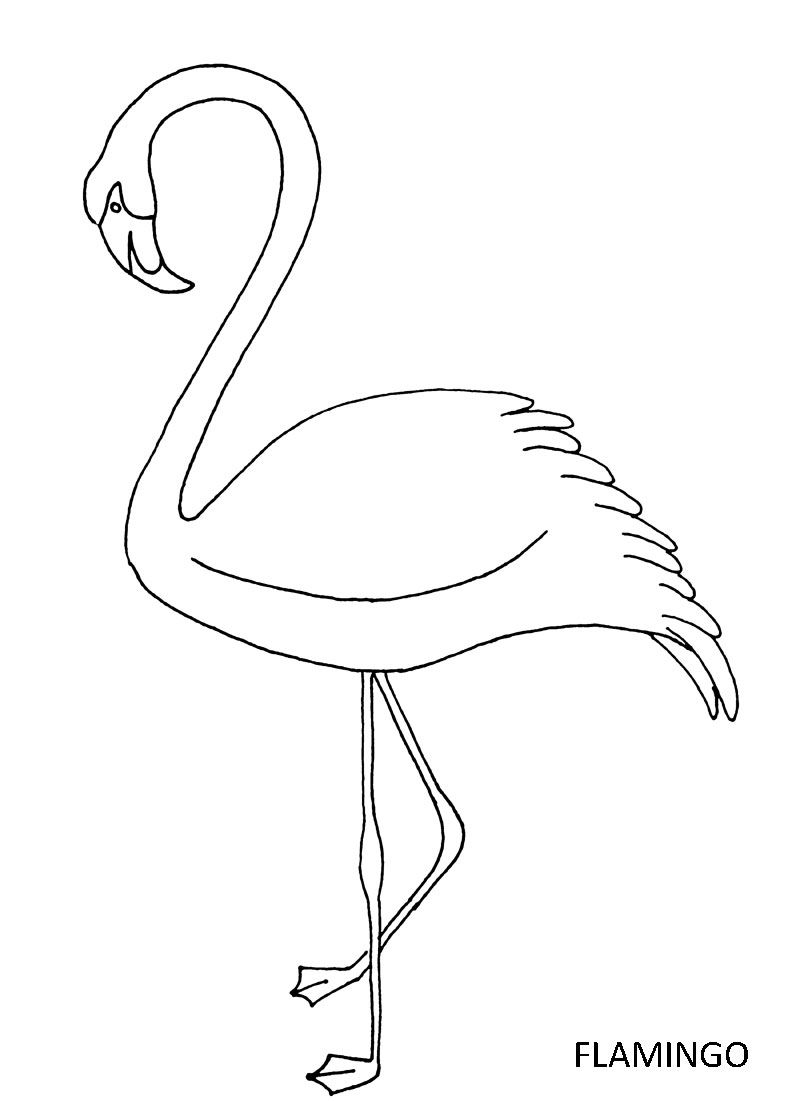 Pink Flamingo Coloring Pages  to Print 11c - To print for your project