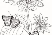 Poppy Coloring Pages - Poppy Flower Drawing Beautiful 30 Beautiful Poppy Coloring Pages