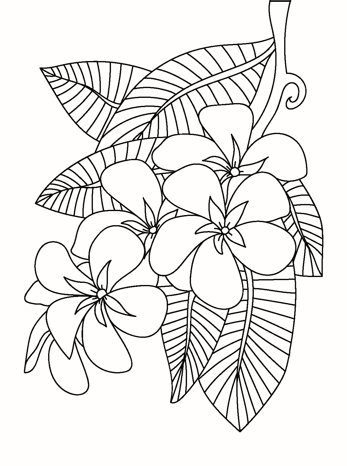 Poppy Coloring Pages  Collection 16q - Free For kids