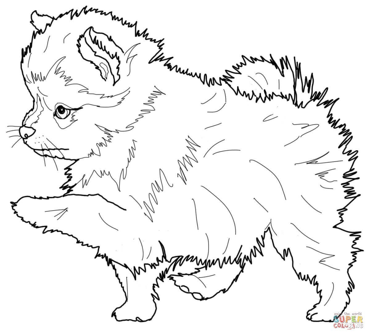 Printable Coloring Pages Of Wolves  Download 5p - Free For kids
