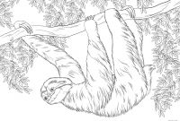 Printable Sloth Coloring Pages - Sloth Coloring Pages Coloring Pages Coloring Pages