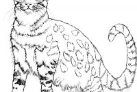 Realistic Cat Coloring Pages - Black Cat Coloring Pages Halloween Coloring Pages