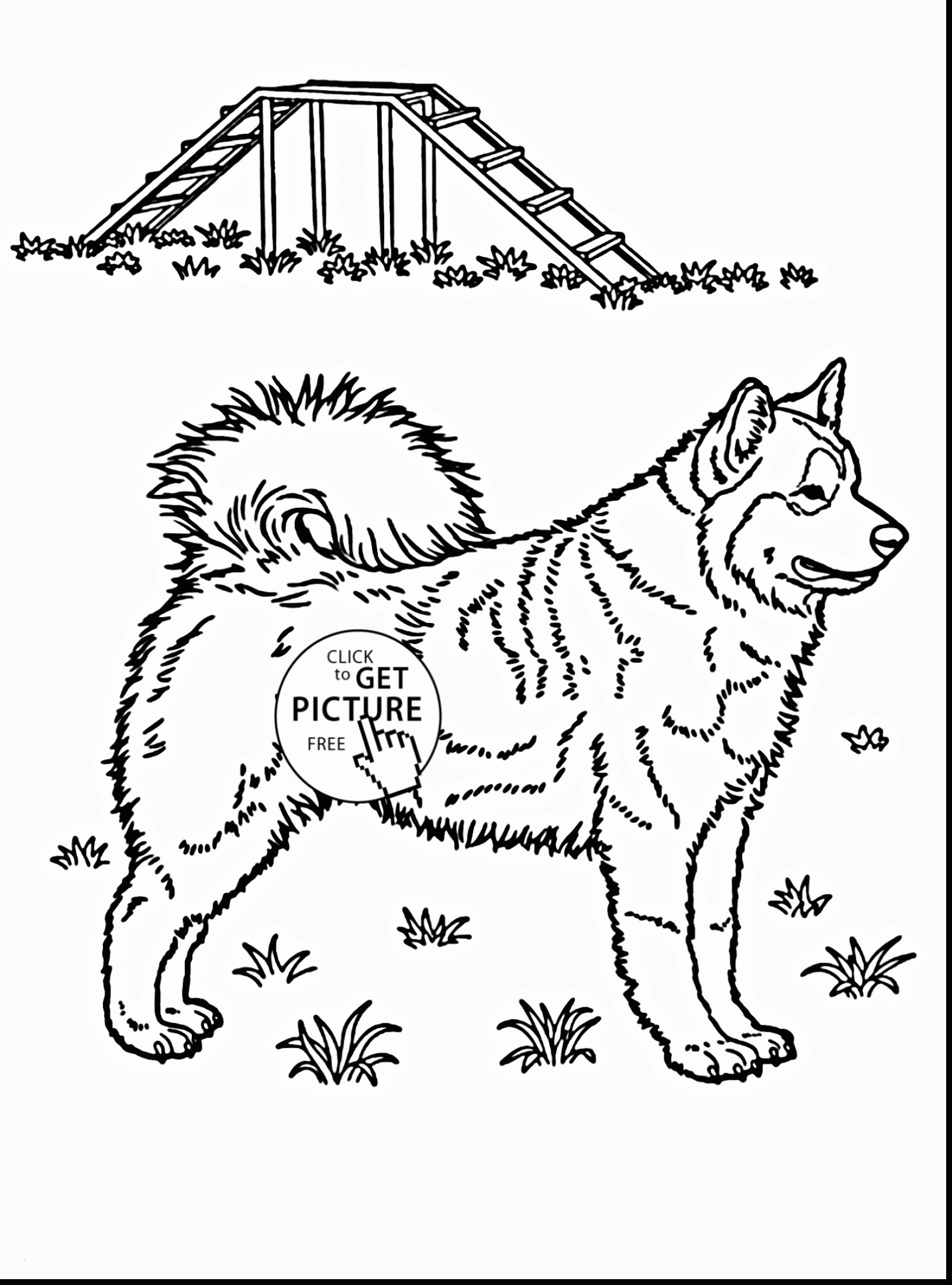Realistic Coloring Pages  Printable 10s - Save it to your computer