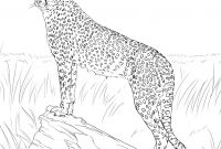 Realistic Fox Coloring Pages - Cheetah Coloring Pages Gallery thephotosync