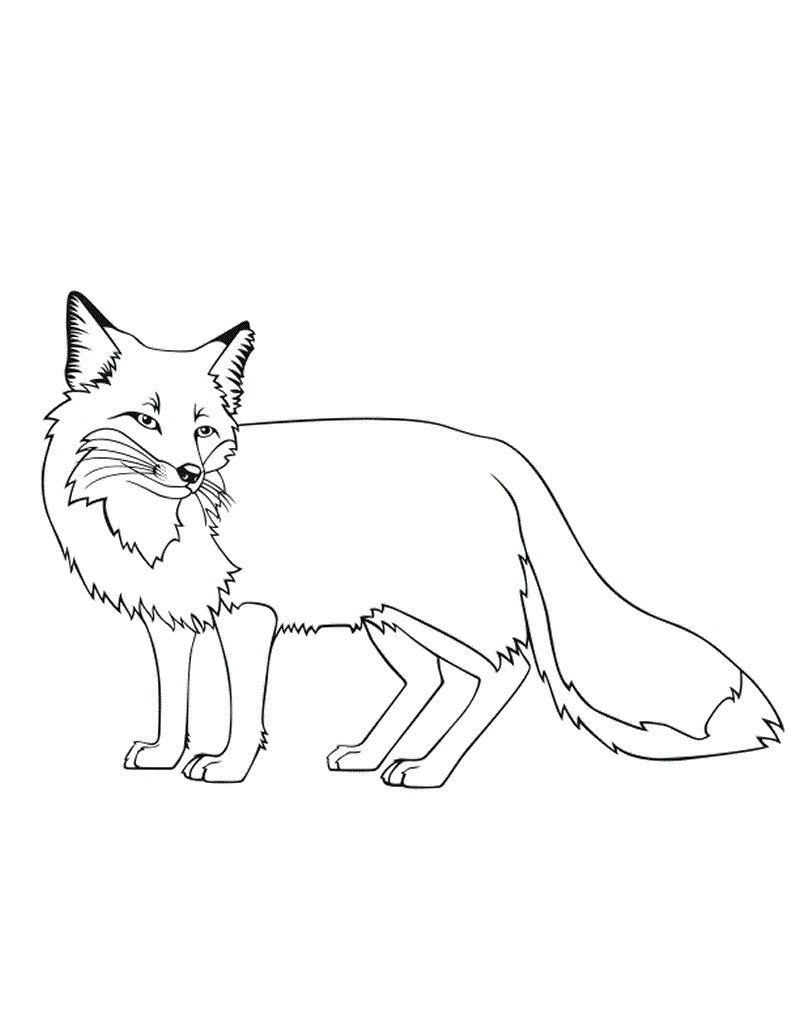 Realistic Fox Coloring Pages  Printable 2g - Free Download