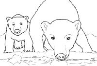 Realistic Fox Coloring Pages - Polar Bear Coloring Pages Sample thephotosync
