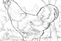 Ruth Coloring Pages - Rhode island Red Rooster Coloring Page