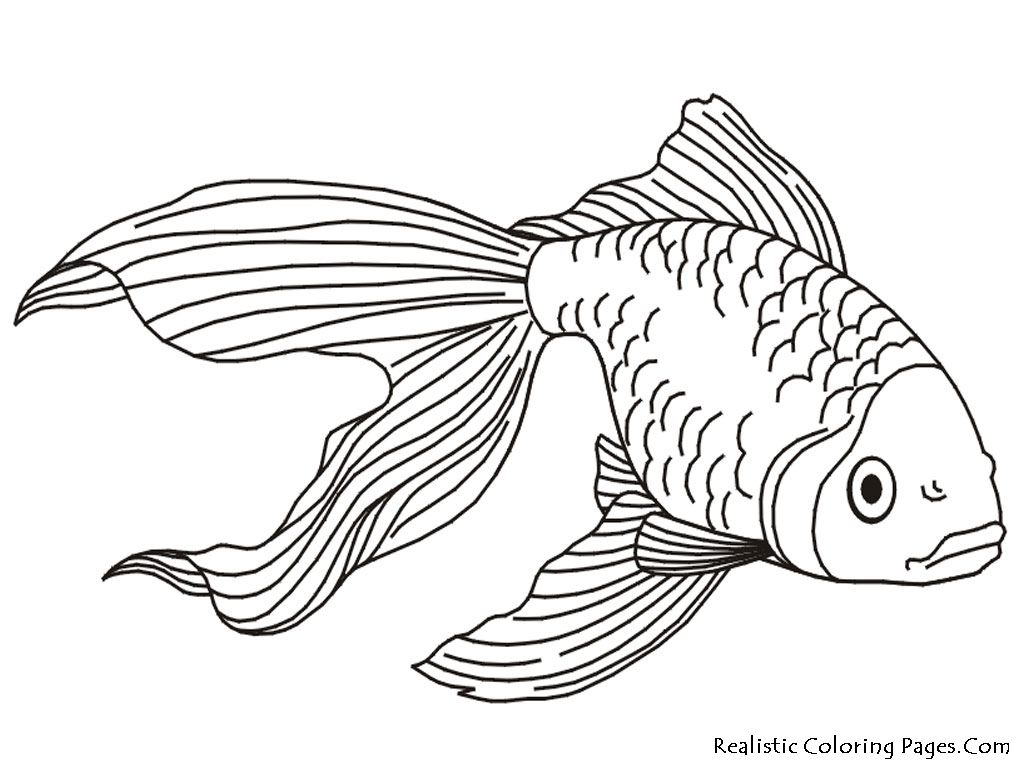 Saltwater Fish Coloring Pages - Tropical Fish Coloring Pages