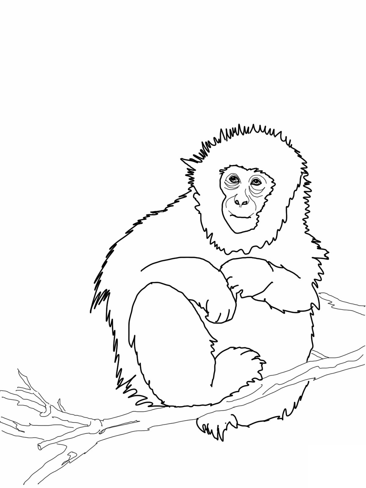 Sock Monkey Coloring Pages  Collection 8c - Free Download