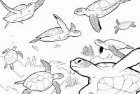 Turtle Coloring Pages - Coloring Pages Sea Turtles Coloring Pages Coloring Pages