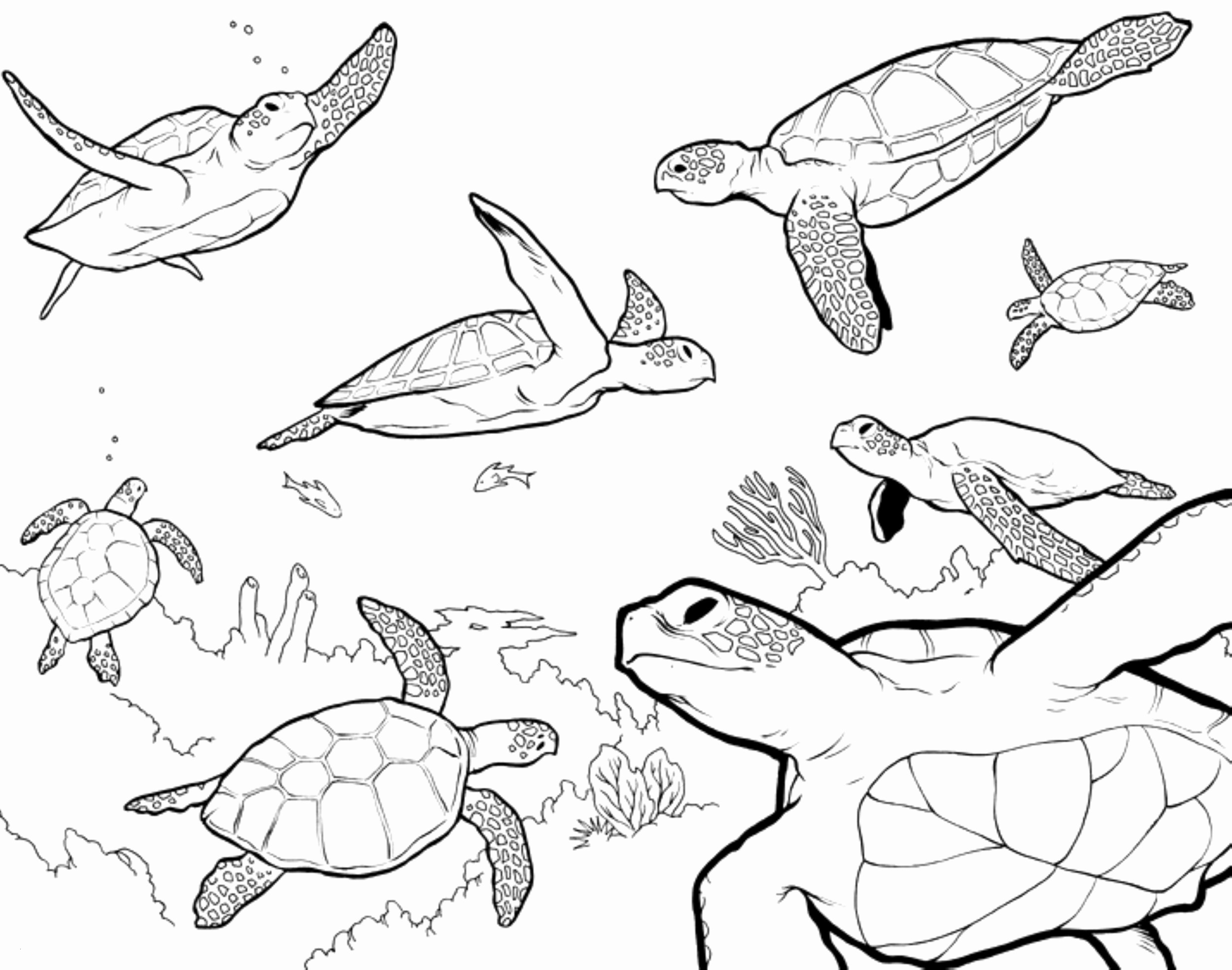 Turtle Coloring Pages  Download 17a - Free Download