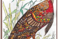 Wild Turkey Coloring Pages - Abc Artists Audubon Wild Turkey Color Blending with Markers