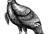 Wild Turkey Coloring Pages - Pin by Vatesdesign On Inking Pinterest