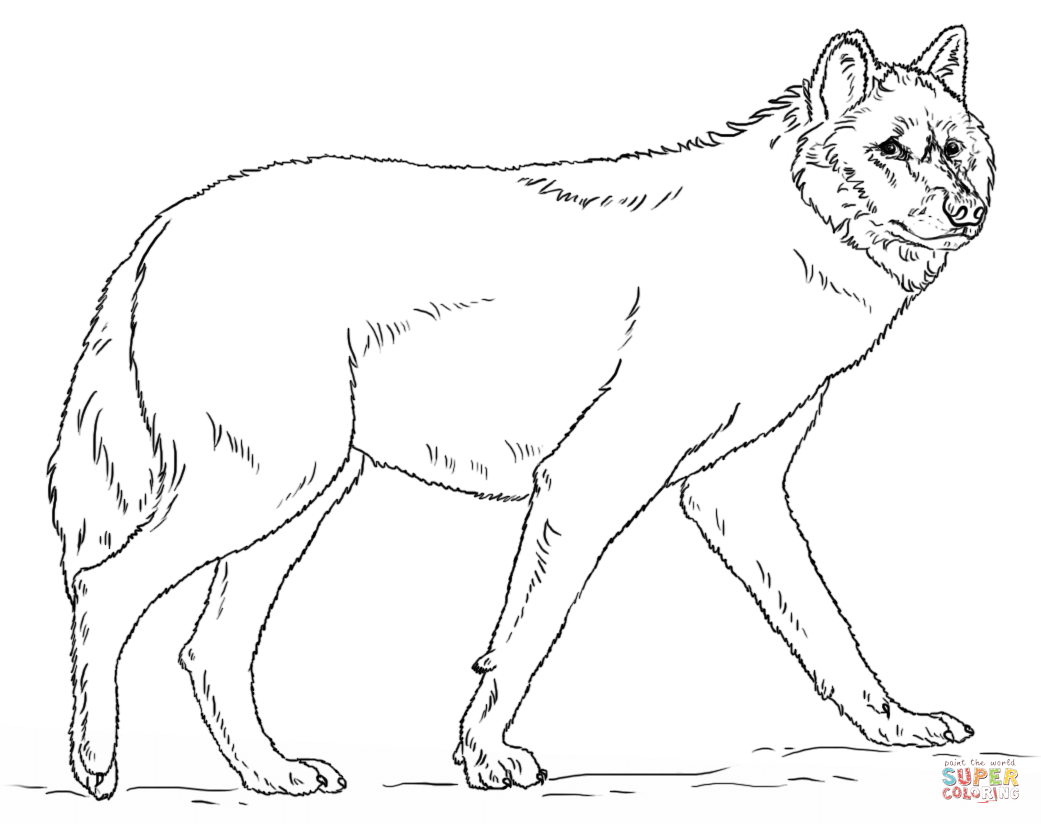 Wolf Coloring Pages Realistic  Collection 8o - Save it to your computer